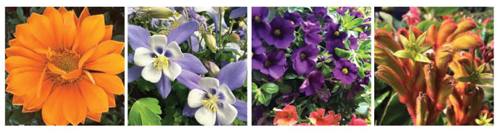 Plant-World-Collague.jpg