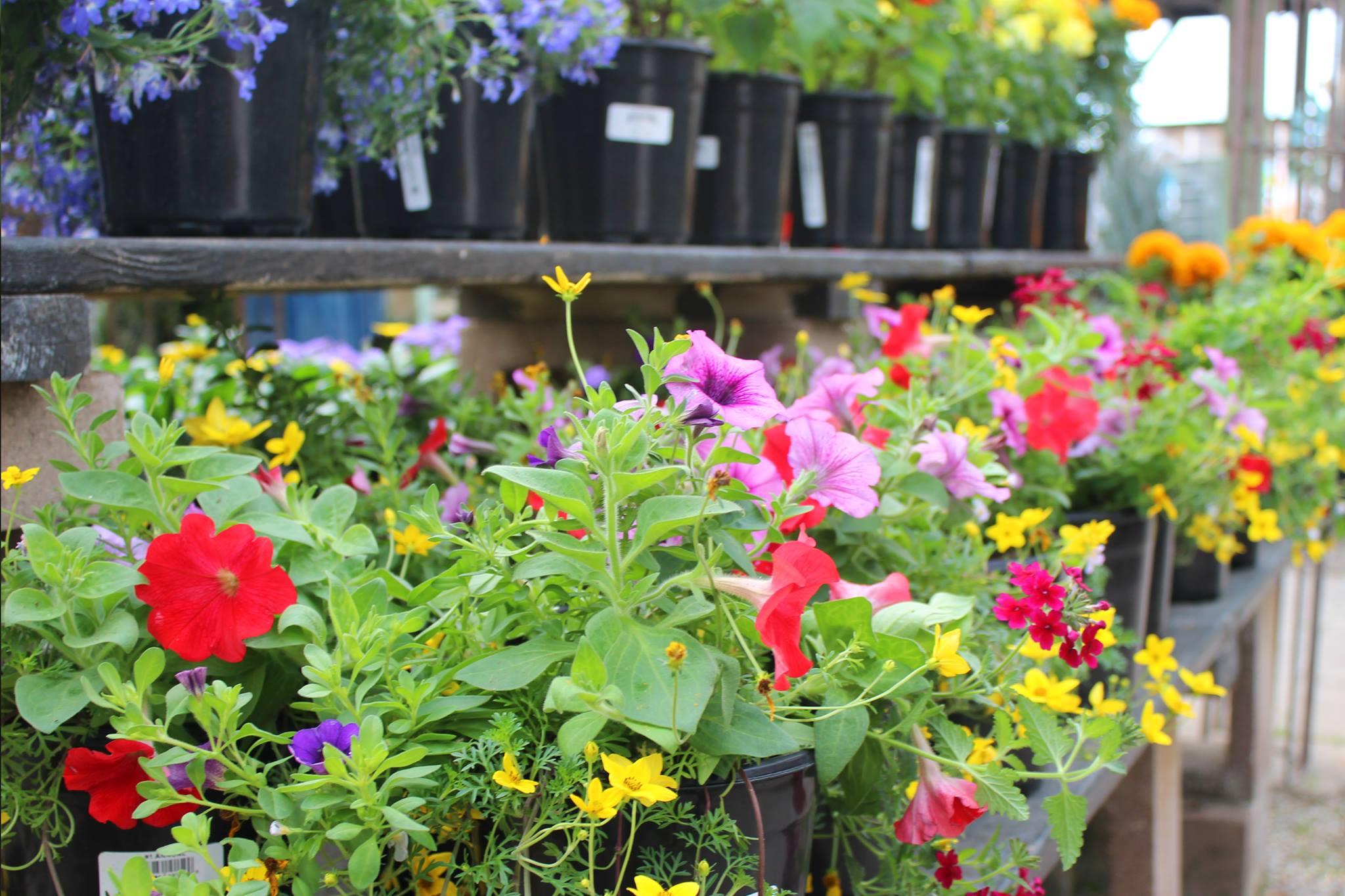 Osuna Nursery_flowers.jpg