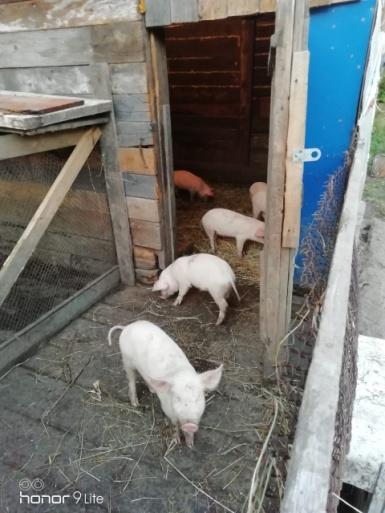 Mercy House Farm.jpg