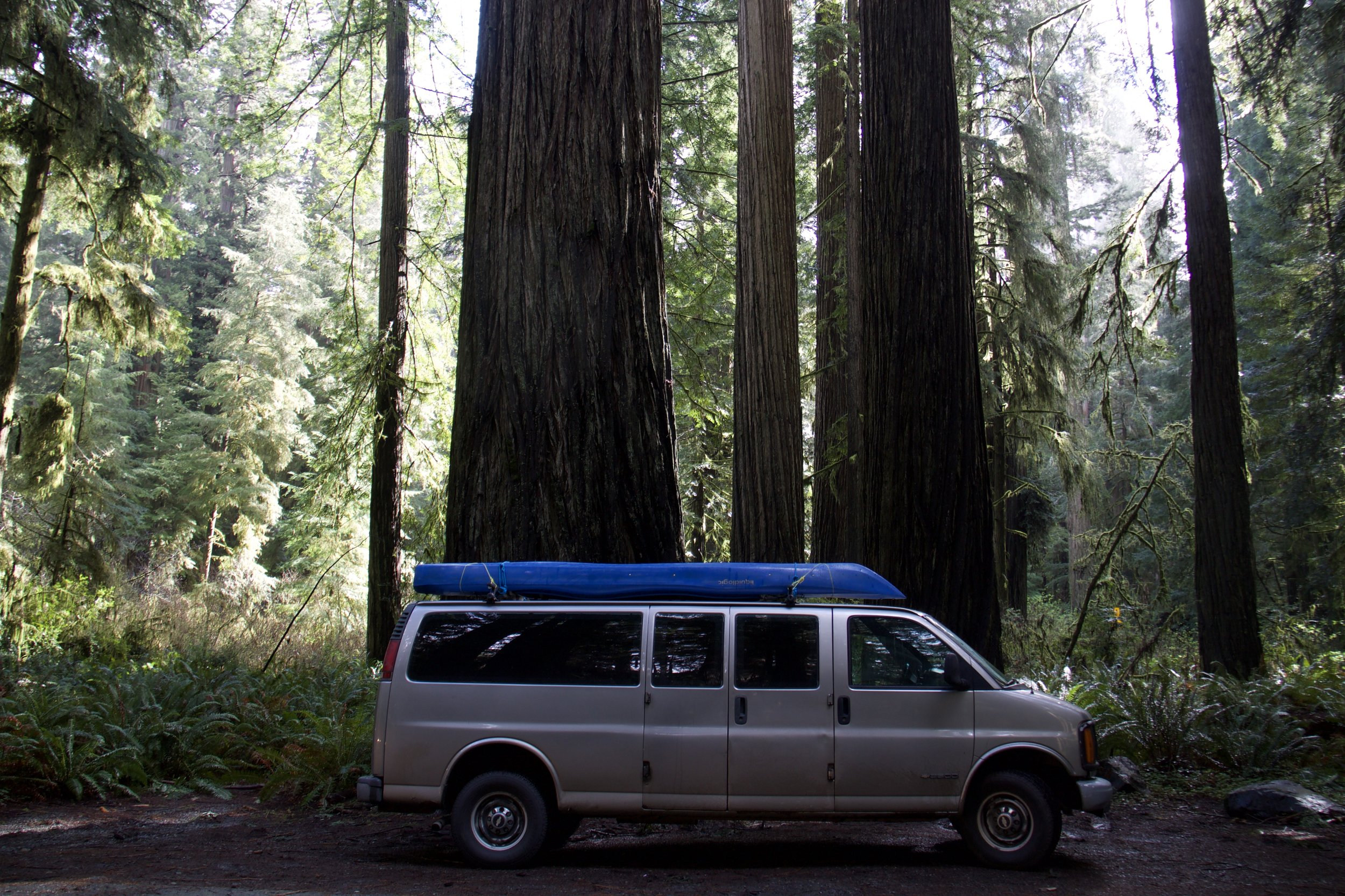 You know the trees are big, when they make a 15 seater passenger van look small! :-P