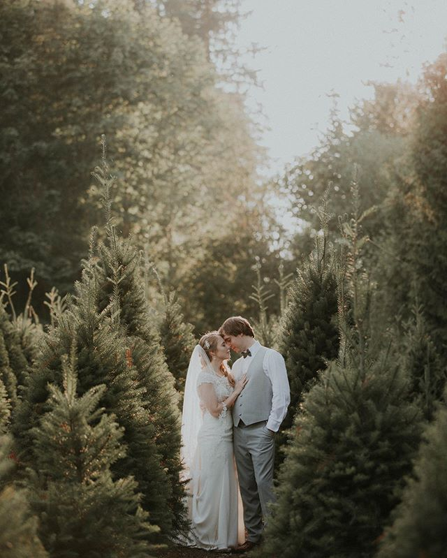 The wedding at @trinitytreefarm felt like it had the Christmas spirit, even though August was in full blast! Surrounded by beautiful green 🌲 trees diffusing the beautiful golden hour that was shifting really fast, we chased the perfect spots for some last portraits. Really pretty venue, check it out if you're getting married soon and you're looking for an unique spot.