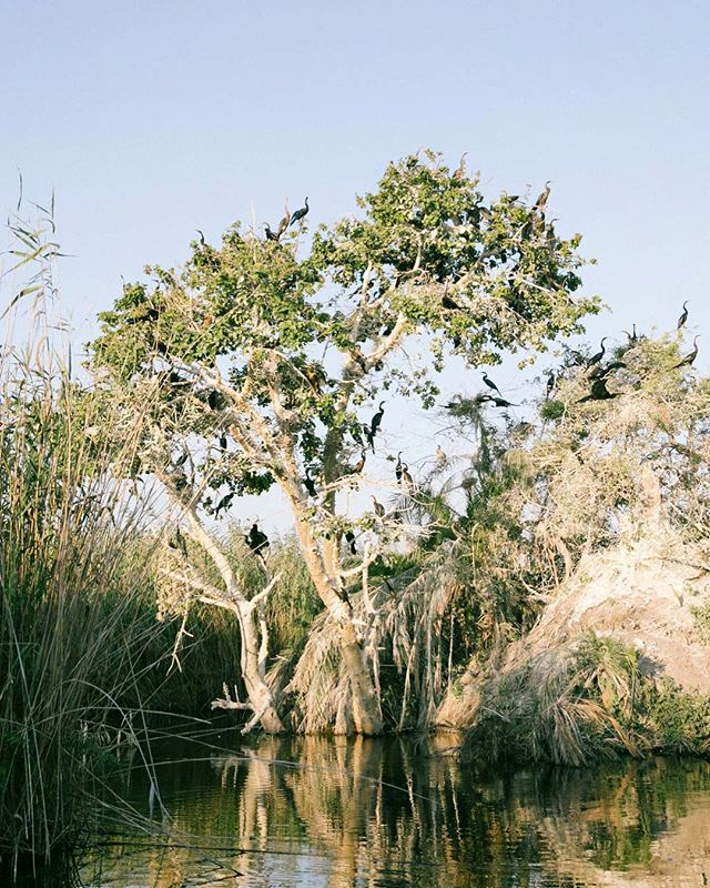Belatedly posting some of my favorite Botswana pics because ya know... Better late than never? Get ready for s bit of an onslaught! :) #botswana #okavangodelta