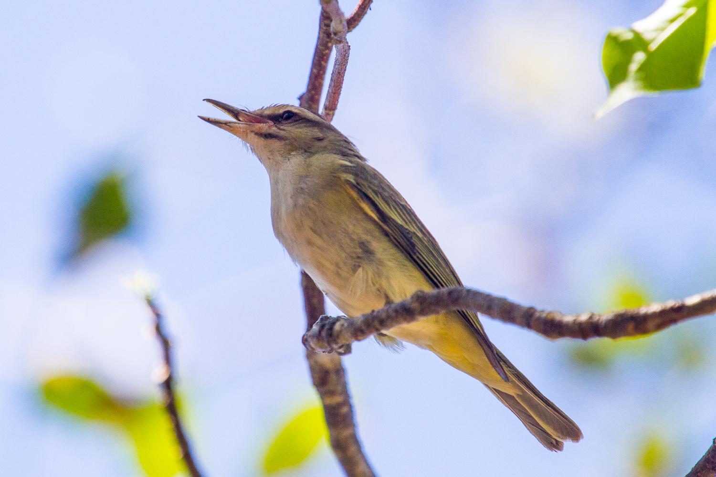 FKAS Web birdset1 (12 of 13).jpg