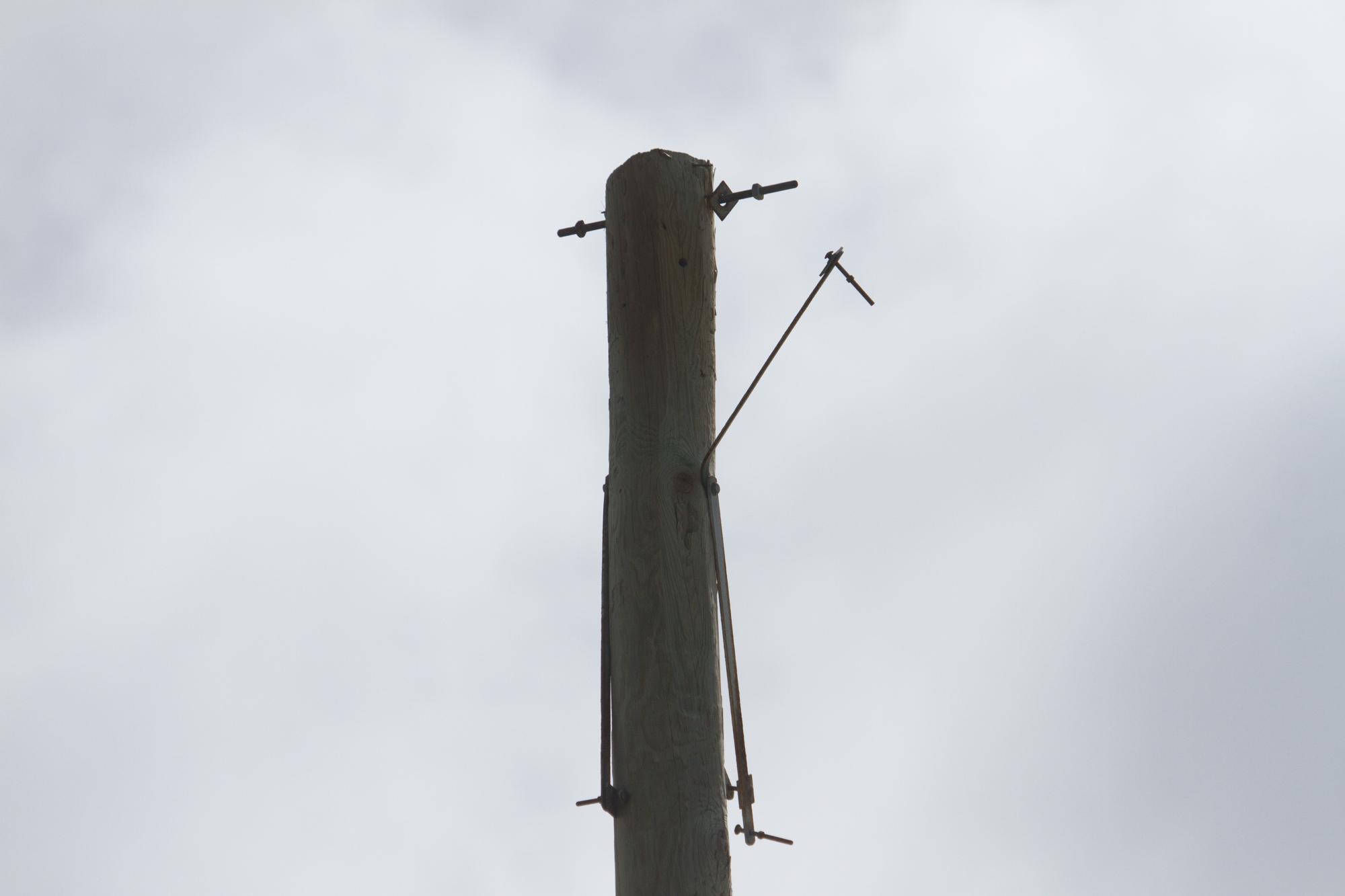 Big Coppit Nest (1 of 1).jpg