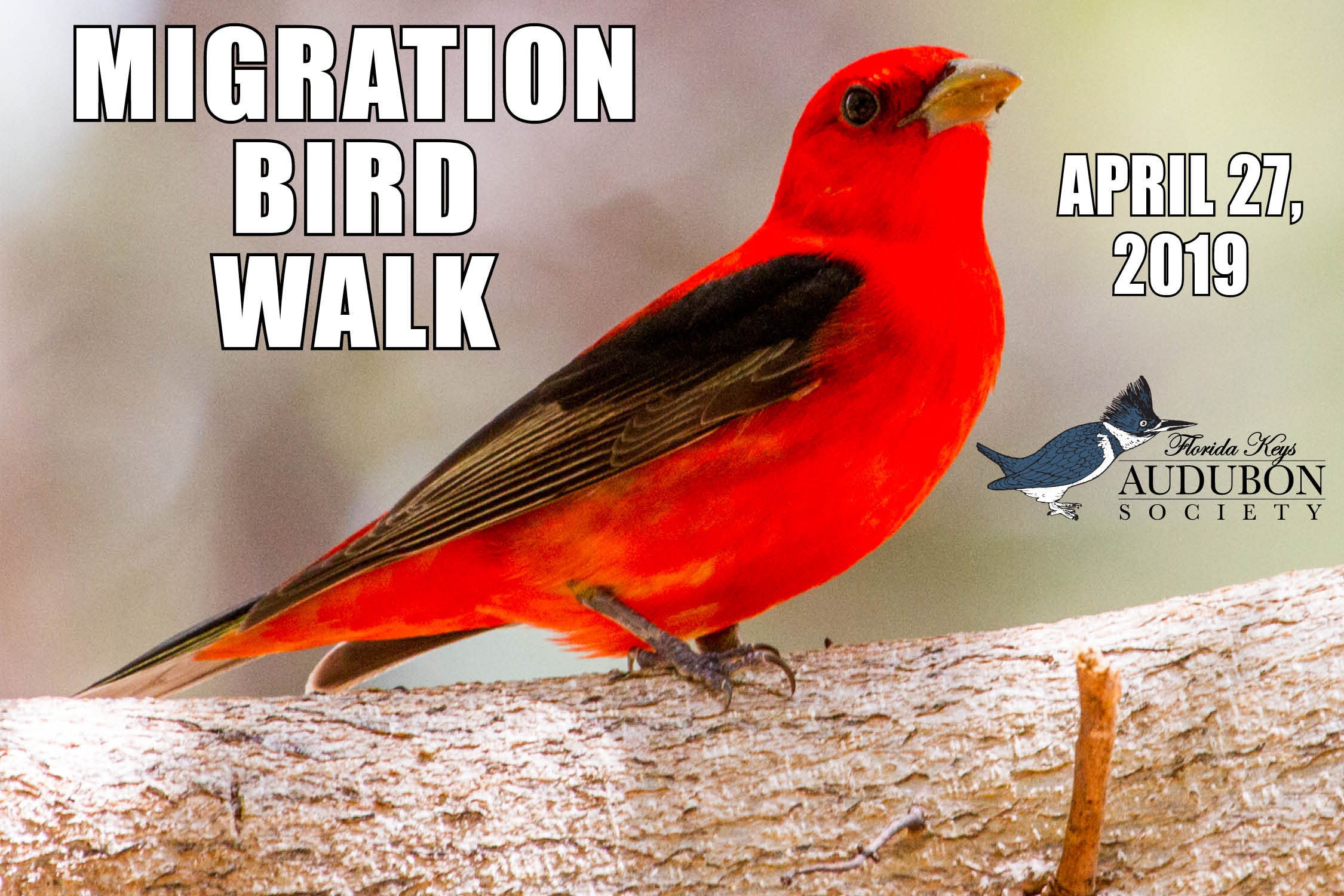 Birdwalk 2019 for FKAS site.jpg