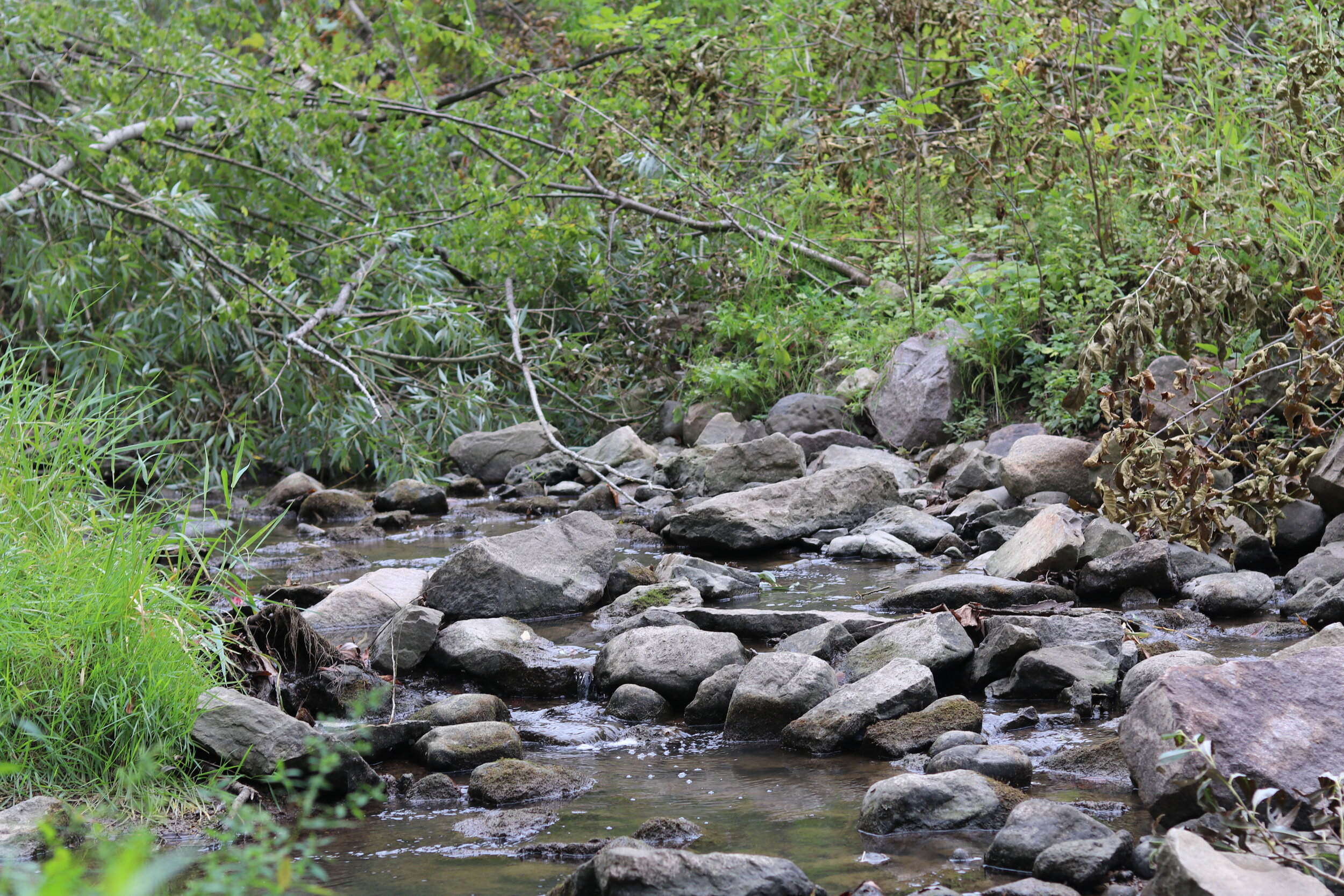 Branches, logs, and other debris were blocking the flow of water in Fish Creek, creating a flooding hazard and also creating pools of warm, standing water.