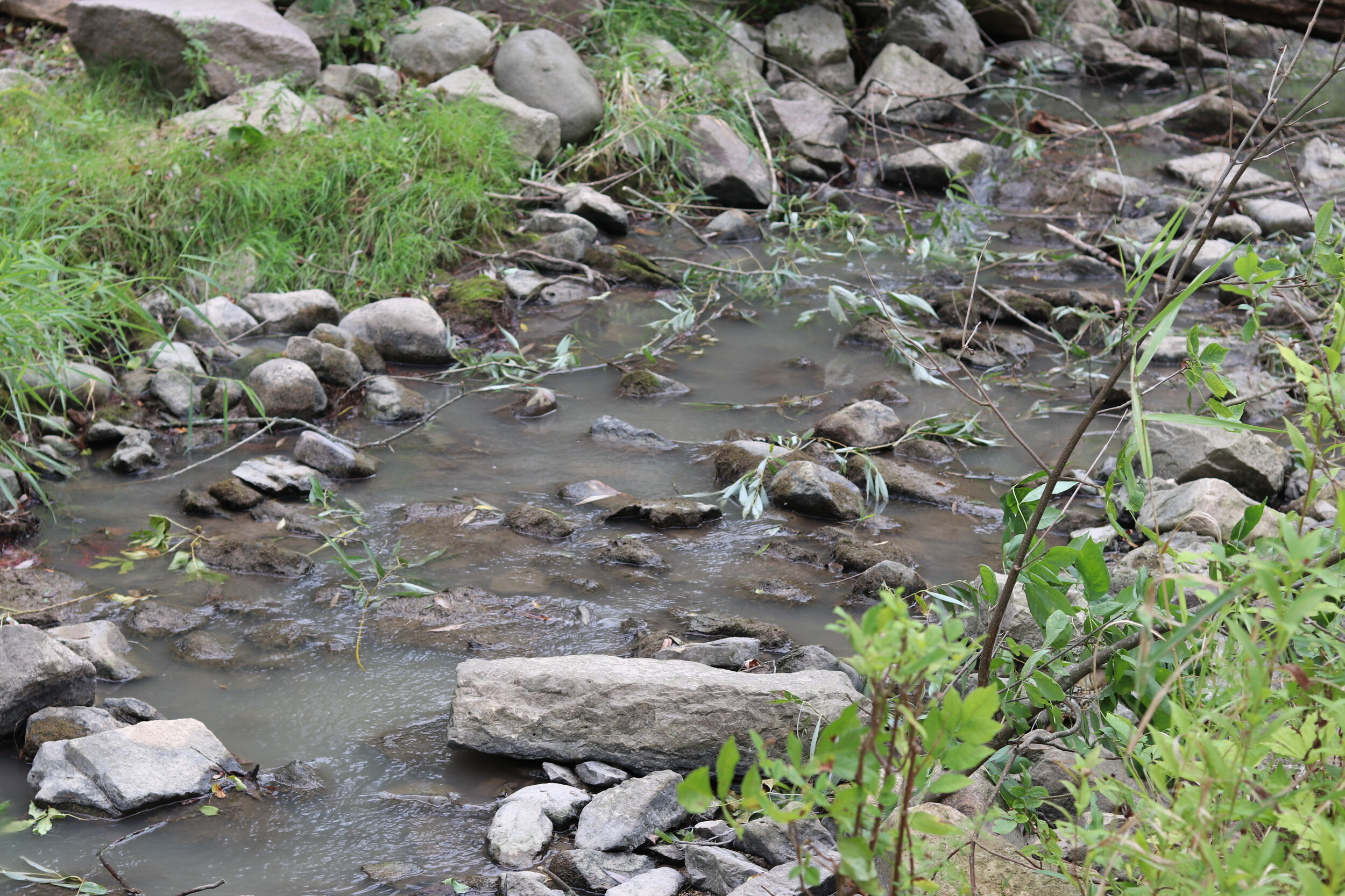 By the end of the day, Fish Creek was flowing much more unhindered by woody debris thanks to our volunteers!