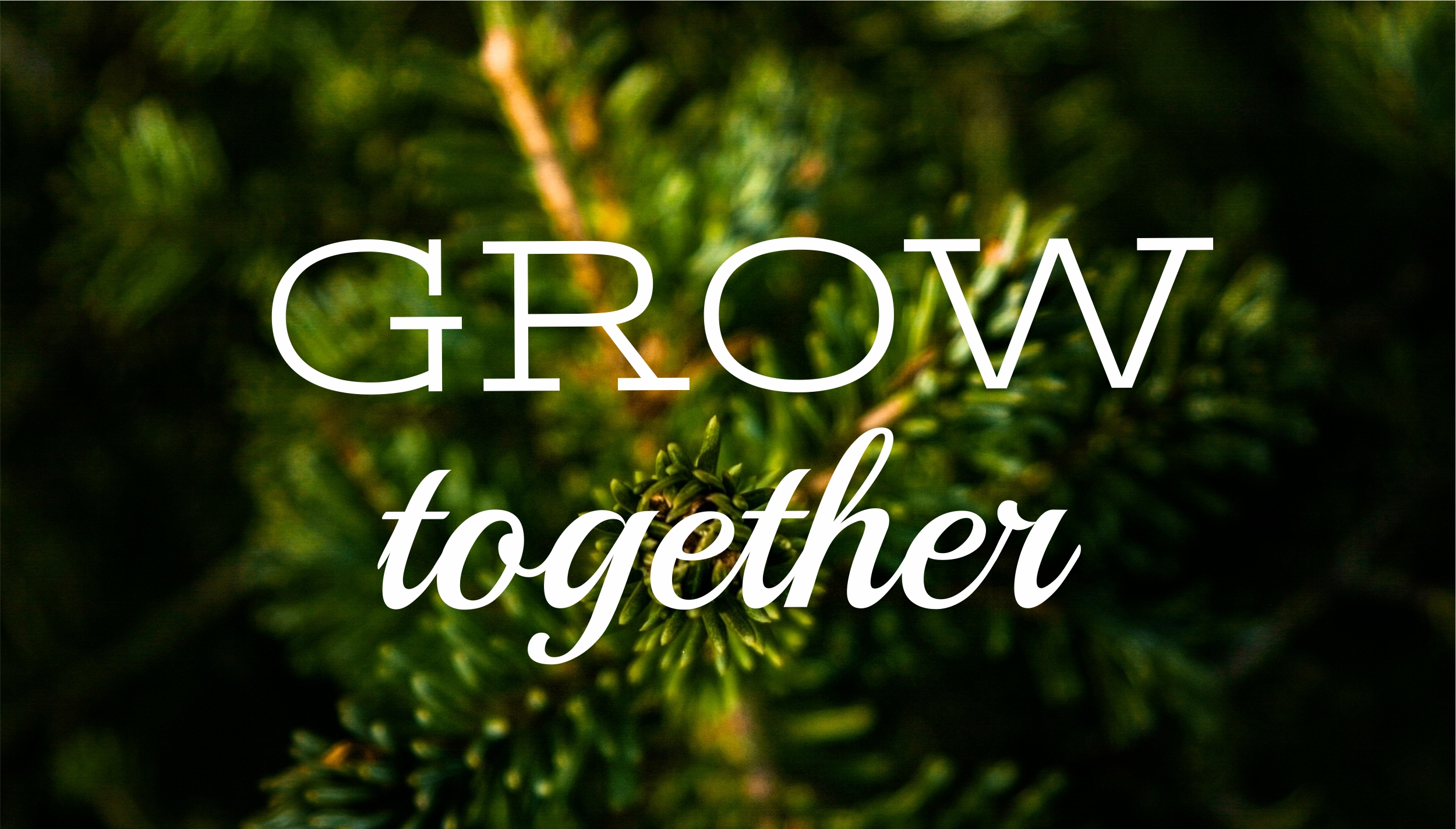 grow together small groups