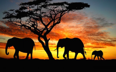 Systemic trauma is like having several elephants in the room   .