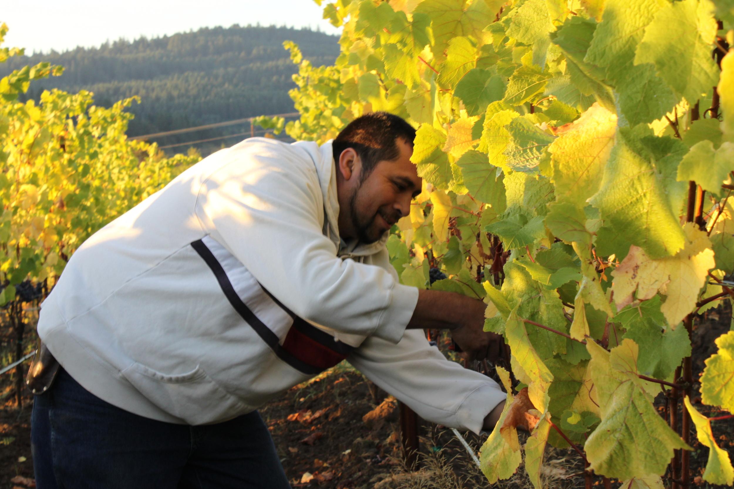 Pedro Martinez - Zenith's Excellent Farm Manager