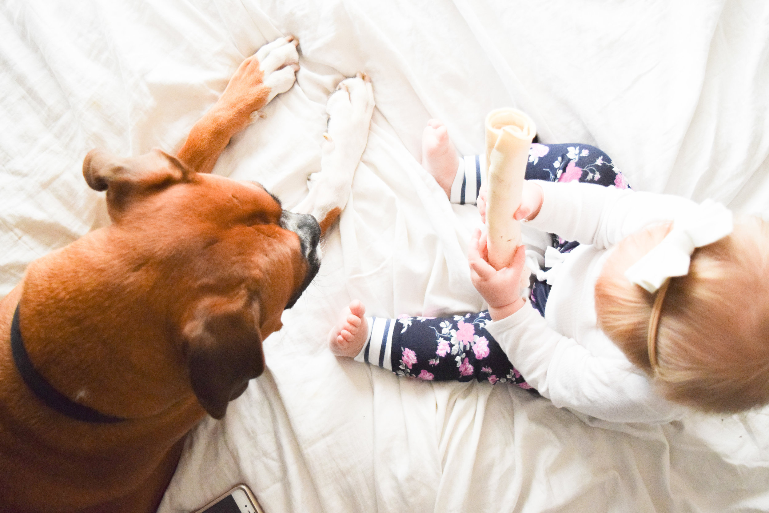 Baby + Boxer Puppy Photos - Floral Baby Joggers
