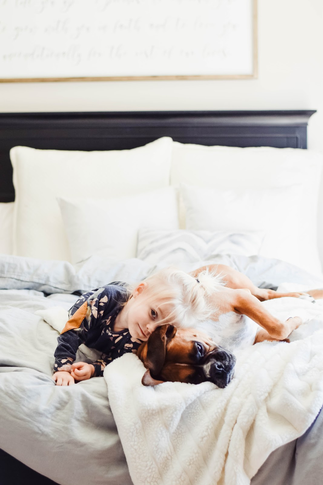The 1 Preventative Pet Essential Owners Forget About  - The Overwhelmed Mommy