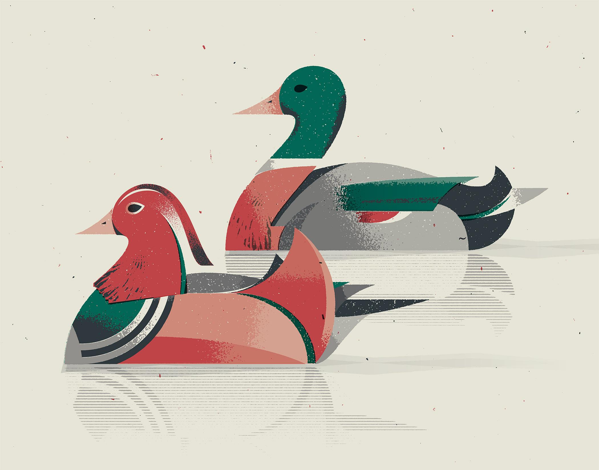 Mandarin and Mallard Ducks Illustration