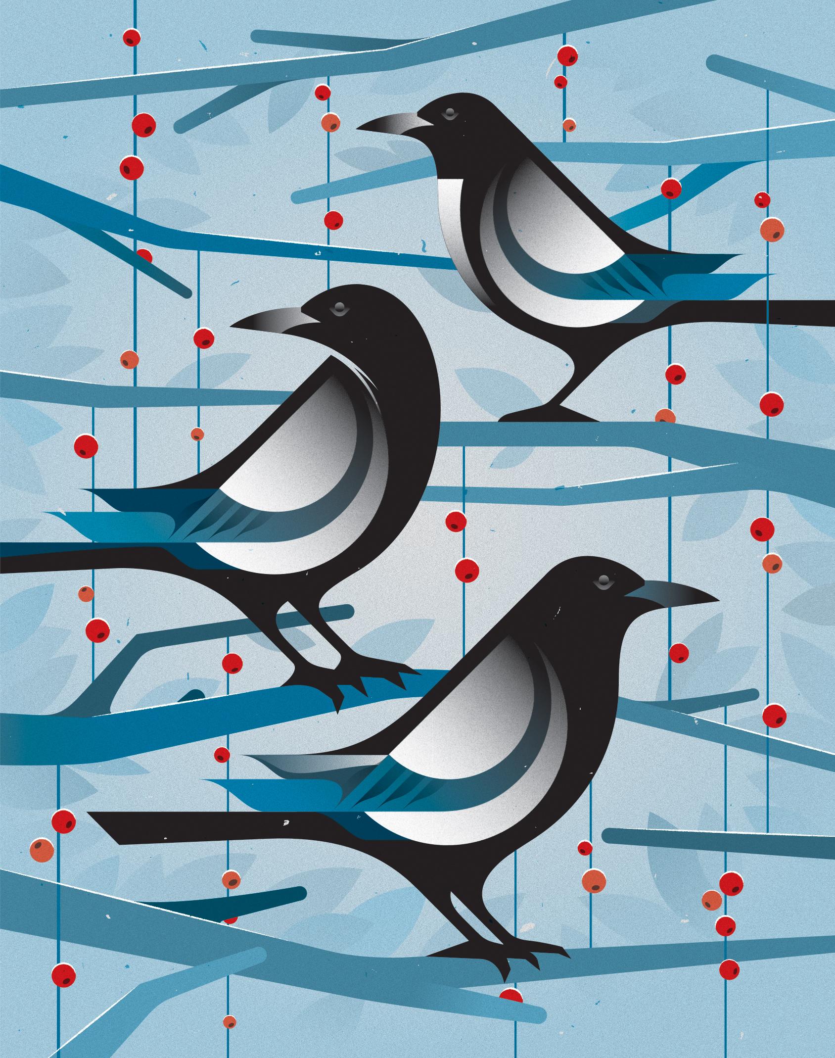 Magpies Illustration