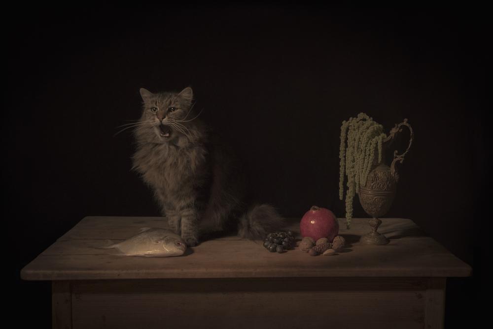 "The Feline , 12"" × 18"", archival pigment print, 2017"