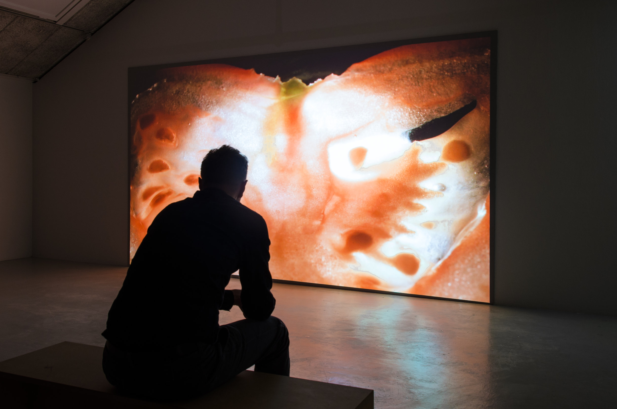 """Exhibition view, video projection of """"Earth and Reveries of Repose—Reveries of Material Interiority"""", 2015, HD video, 23:52 min. Ram Gallery, Oslo, 2015"""