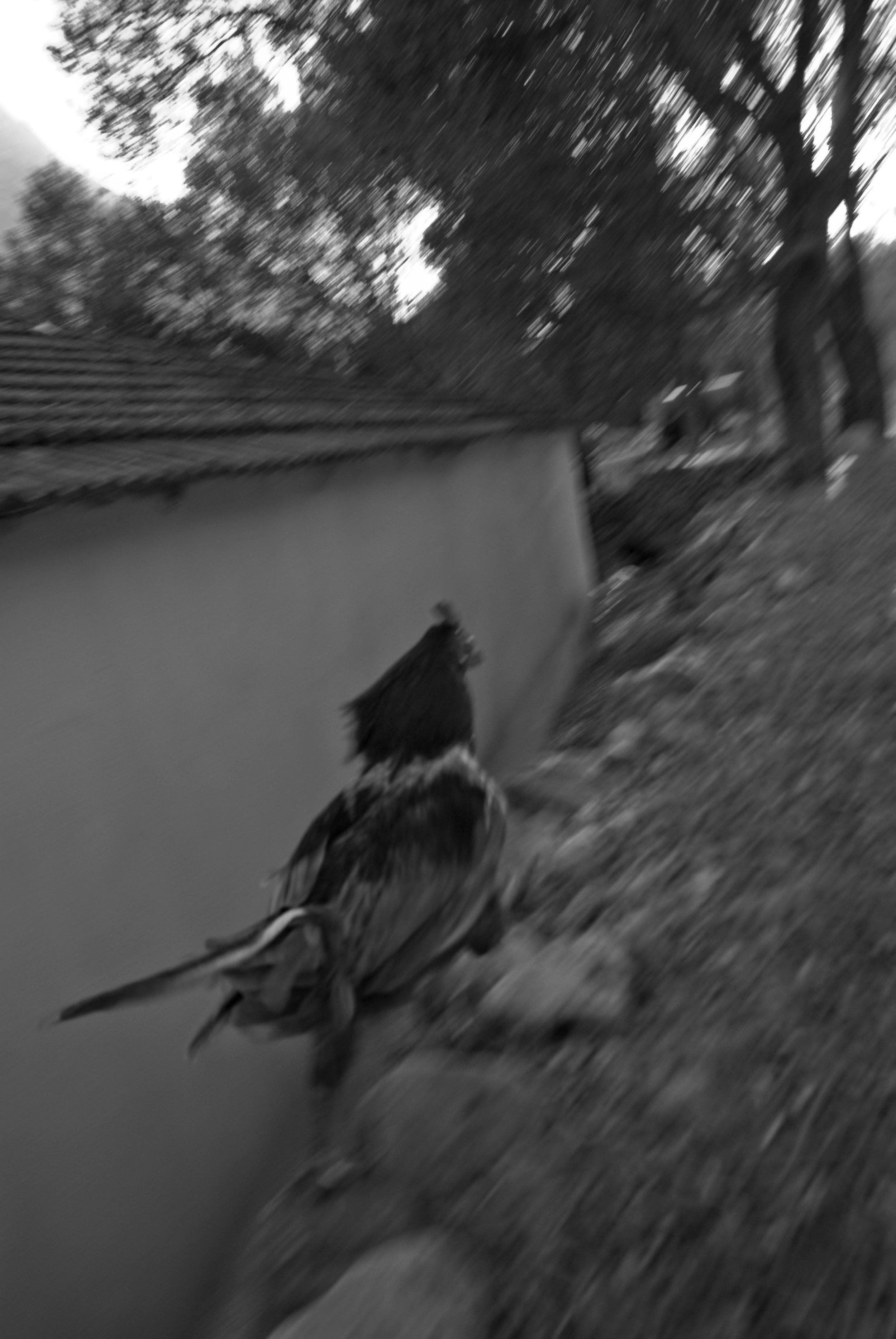roosterun.jpg