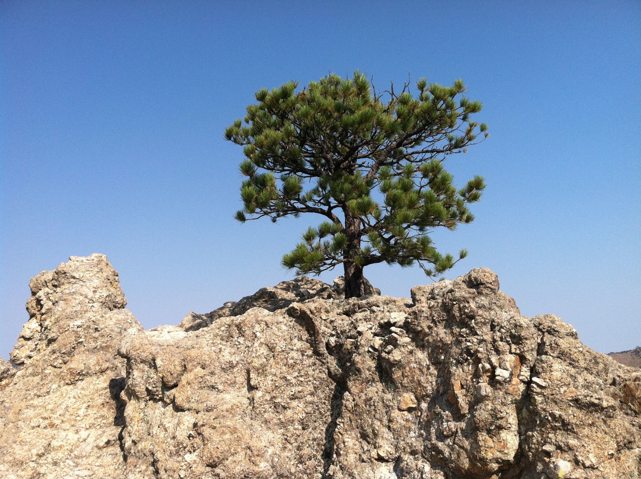 Tree on hill.jpg