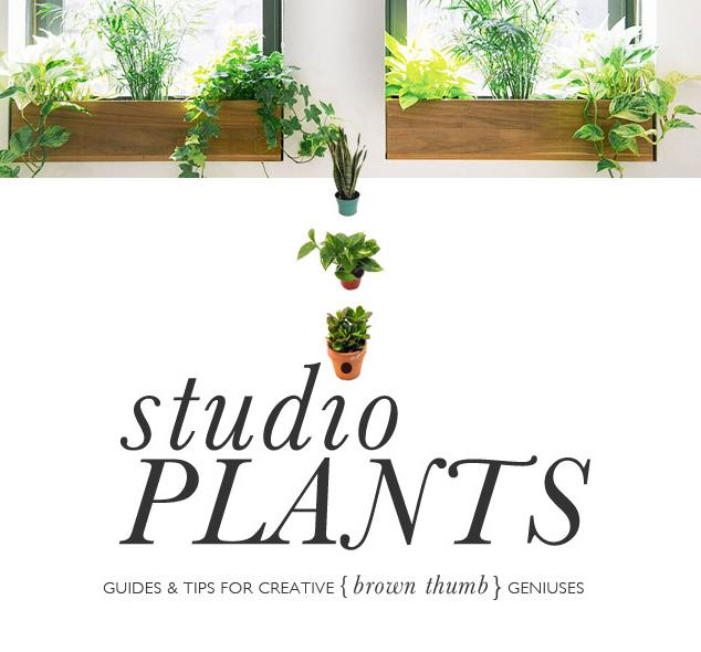 Studio Plants - Indoor Plants for Brown Thumbs - Design Wine Sunshine - Oliwild