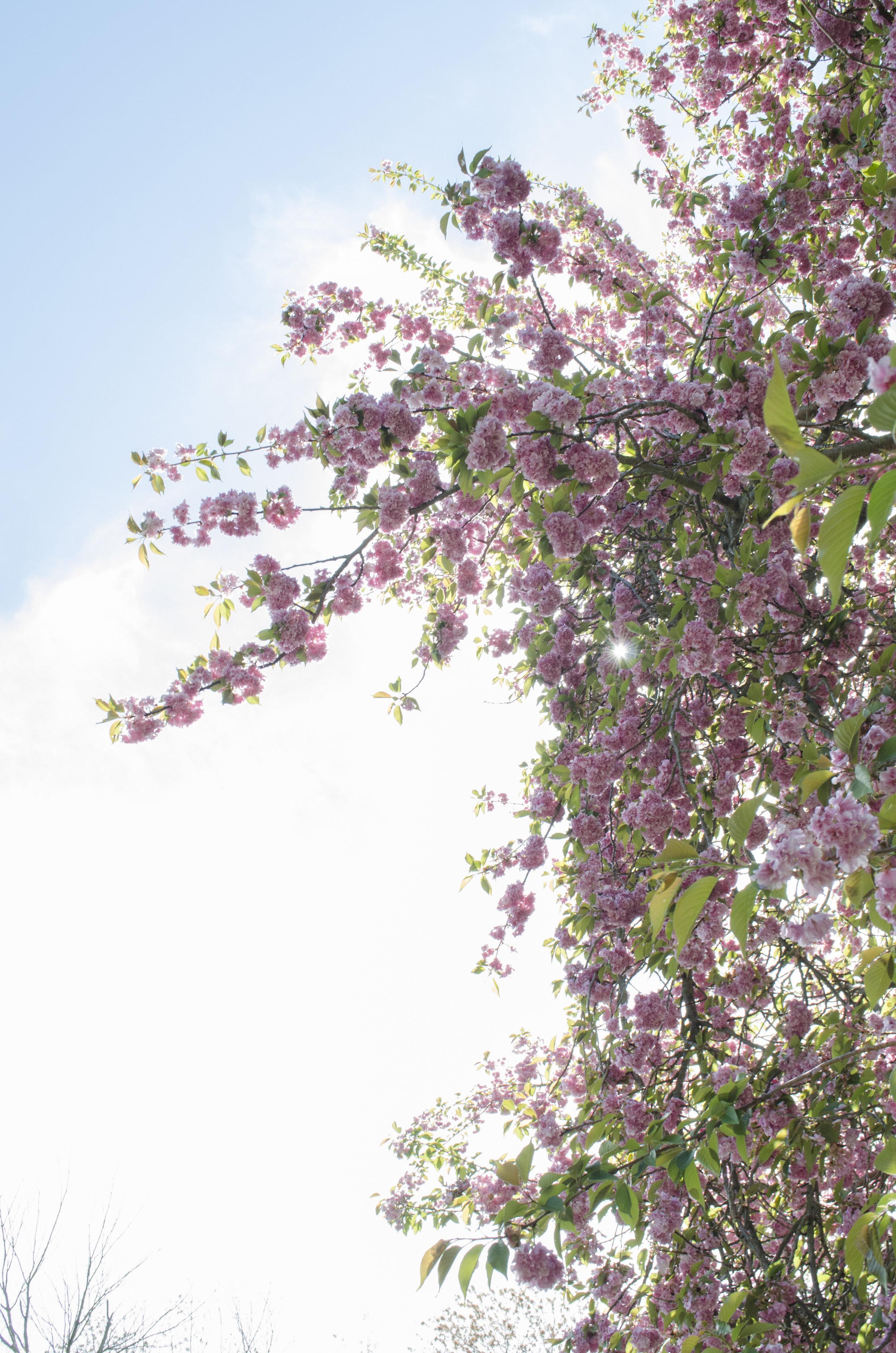 Blossoms_1.jpg