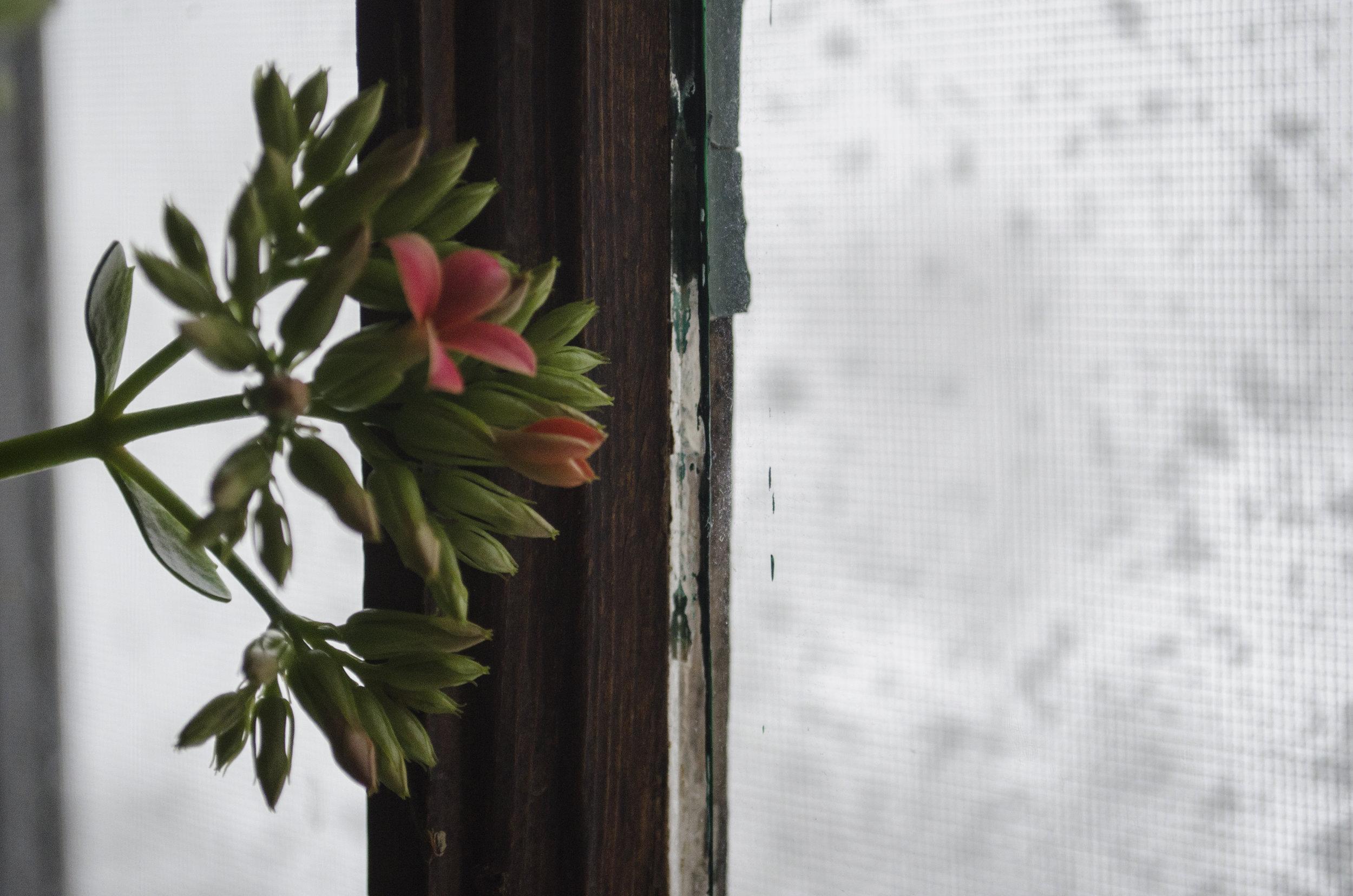 gentle-snow_32703031991_o.jpg