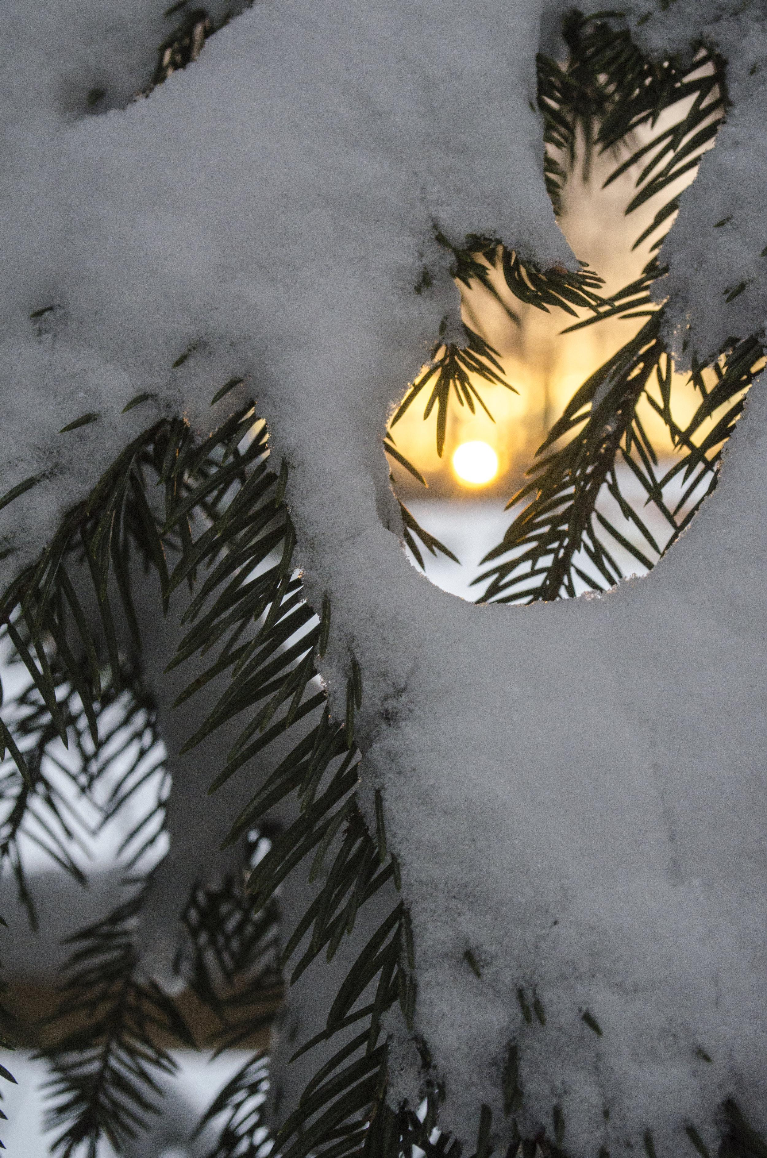 sun-setting-through-the-pine_32440657680_o.jpg