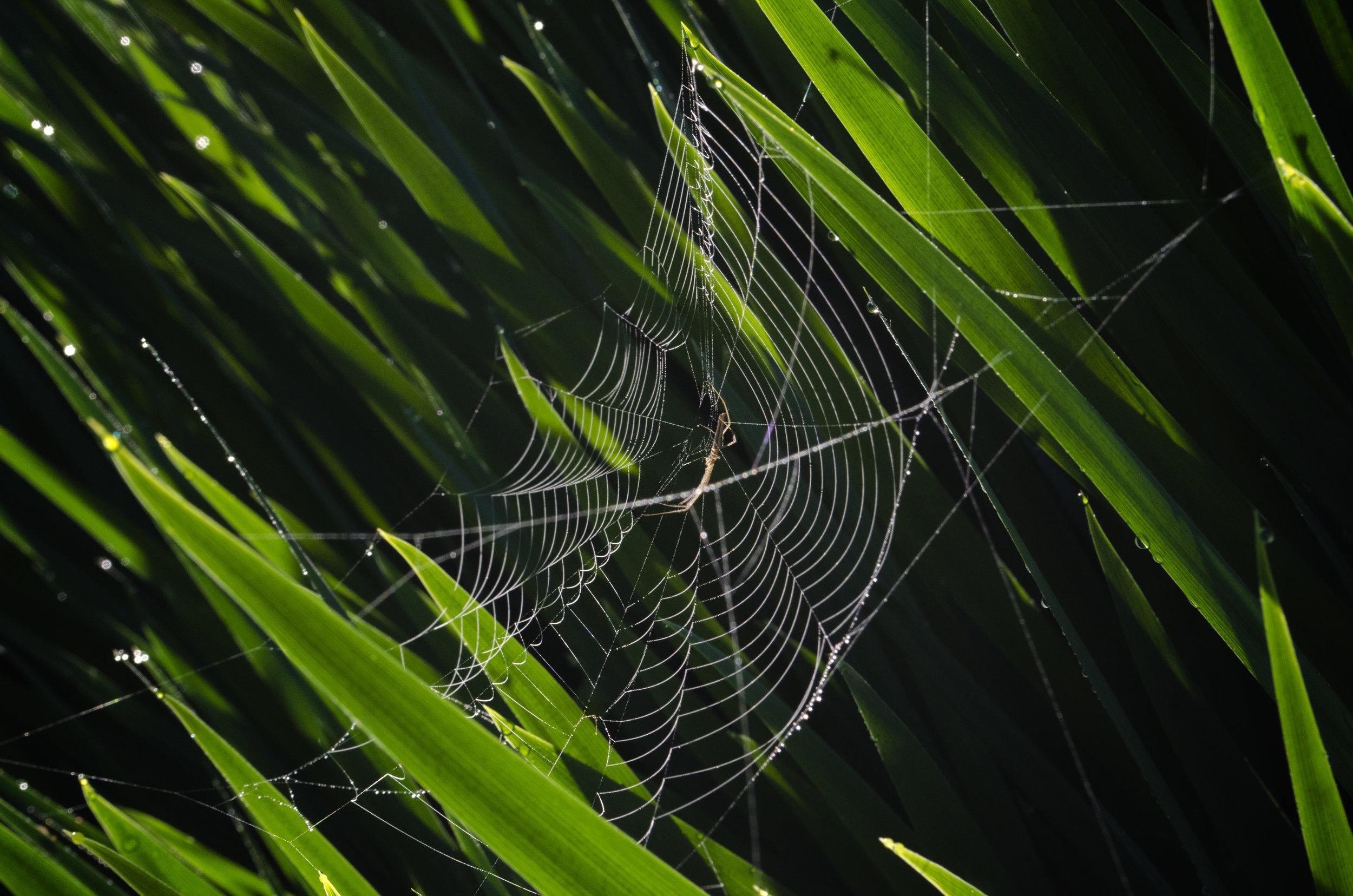 spider_17250878193_o.jpg