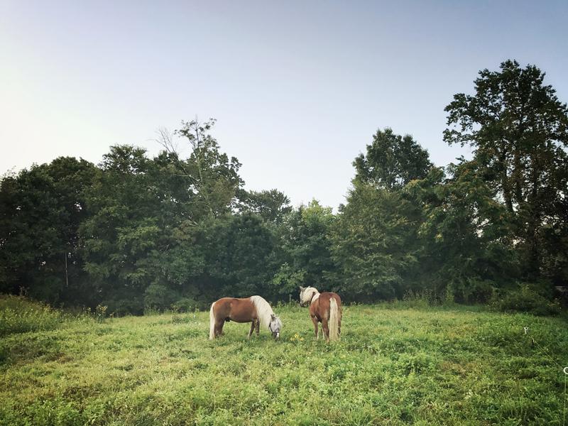 HorsesFieldResized.jpg