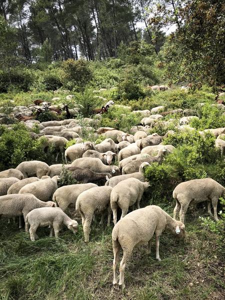 SheepWeb.jpg