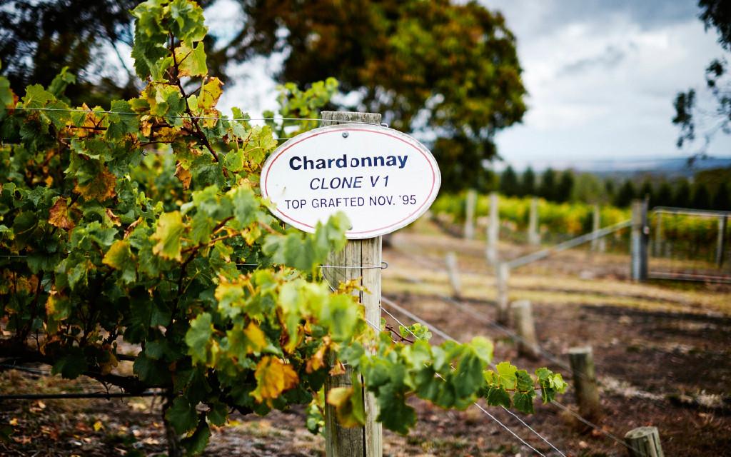 wines-sub-chard-slide3.jpg