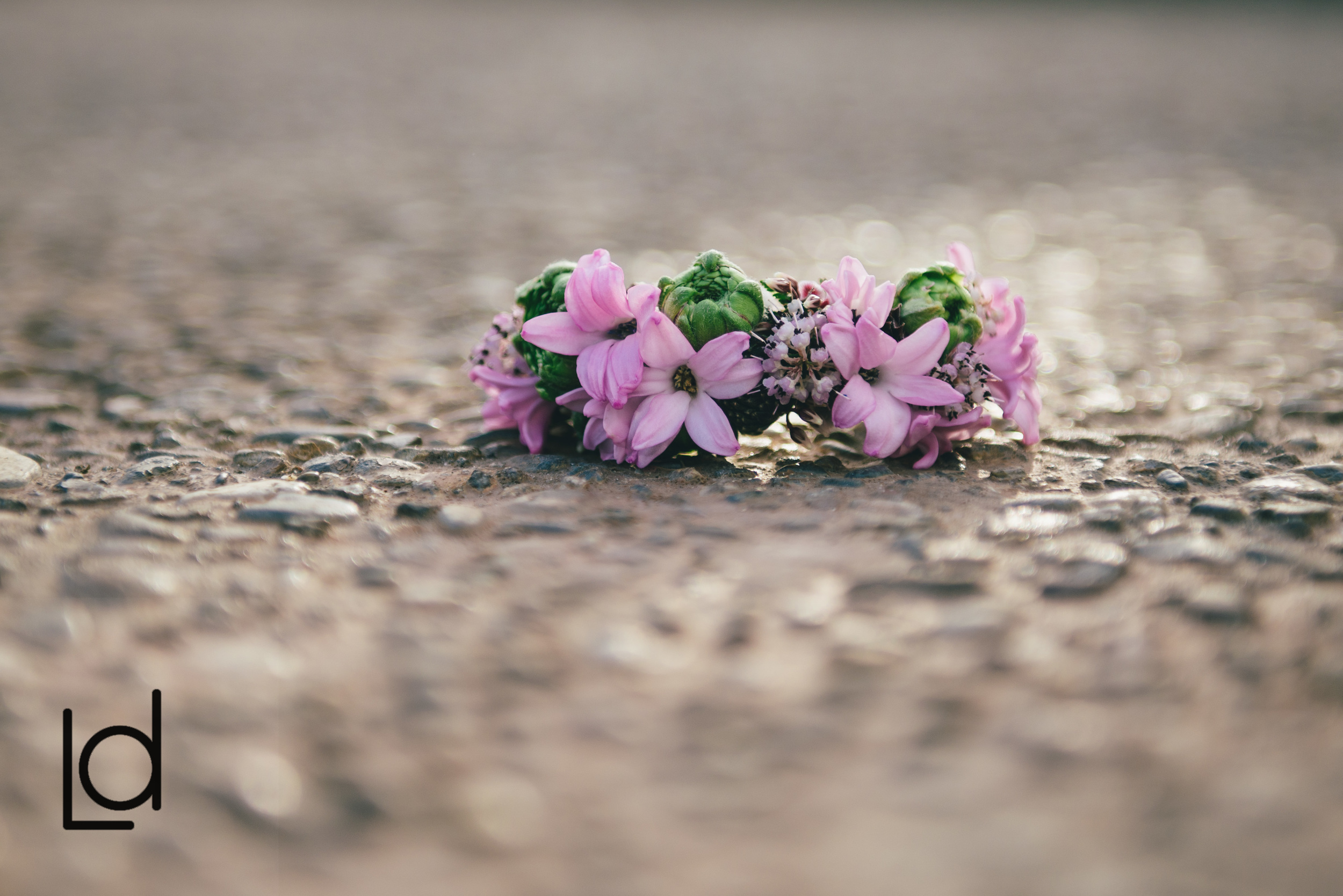 Philadelphia Wedding, Horticulture Center, Flower Crown, Garden Rose, Bride, Bridal Flowers, Lauren Driscoll Photography