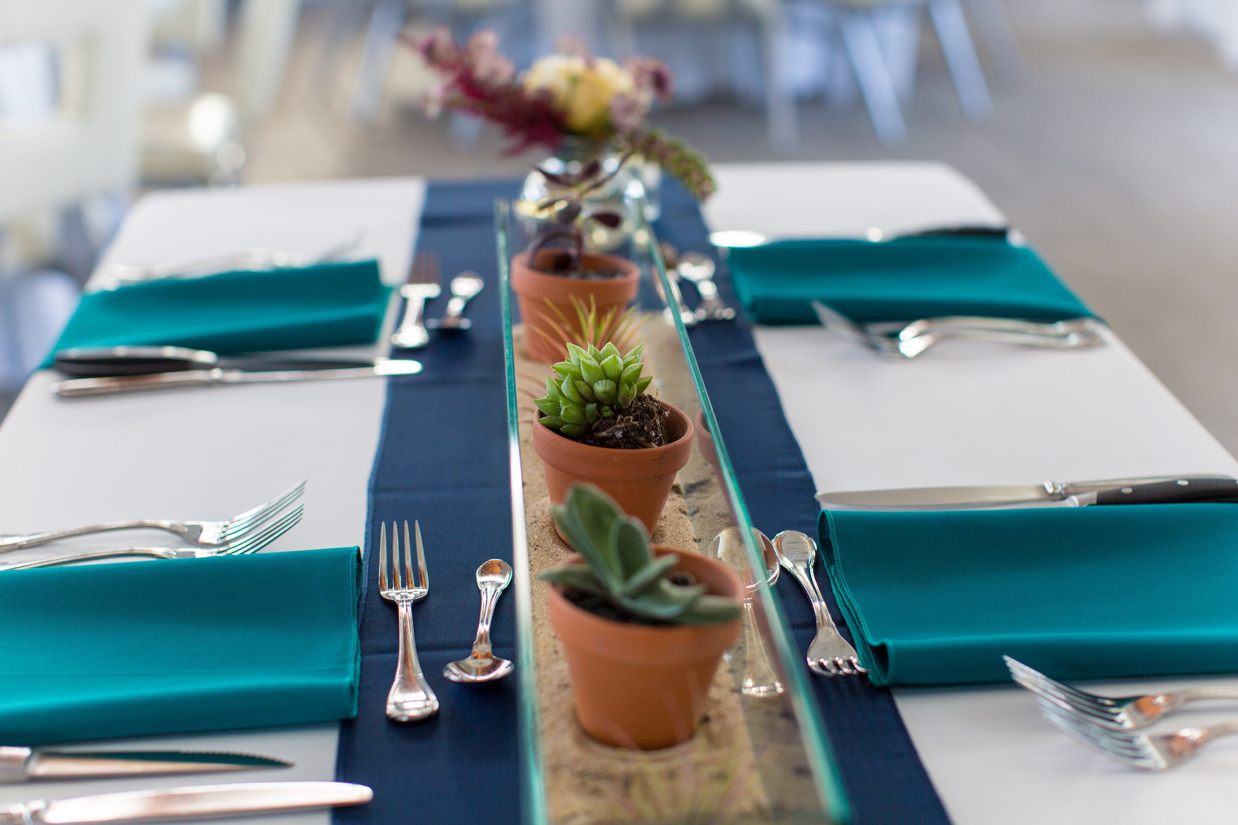 How cute are these potted succulents! Placed in sand in our recycled glass vase, we brought the beach inside.