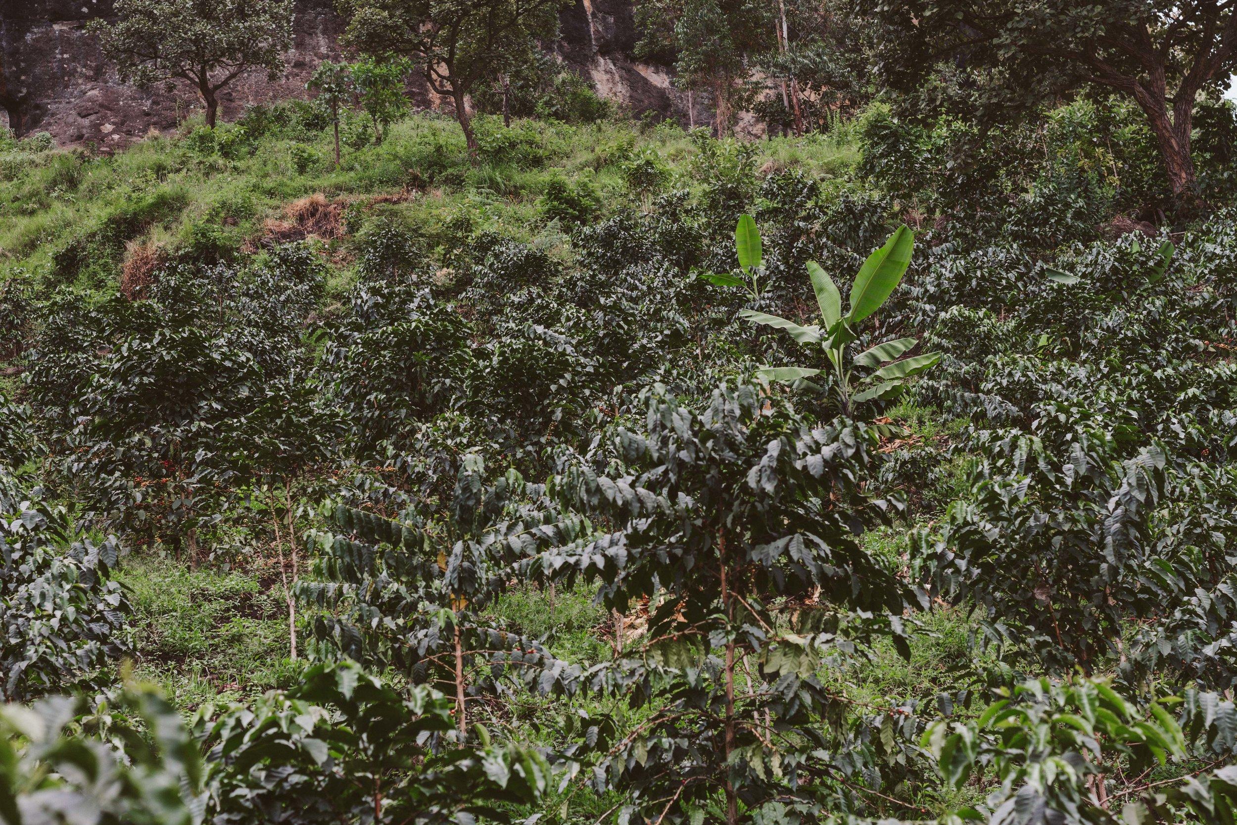Ryan_Uganda-0041.jpg