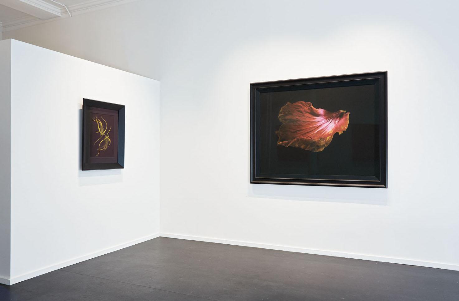 Installation view Fiona Pardington:  Mokosoi  {Suite}, Wellington  ______