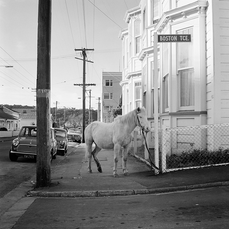 Ans Westra  Boston Terrace, Wellington , 1974 Pigment print on Hahnemuhle Photo Rag 380 x 380 mm Edition of 25 $1,800 incl. GST unframed, $2,150 incl. GST framed  ______