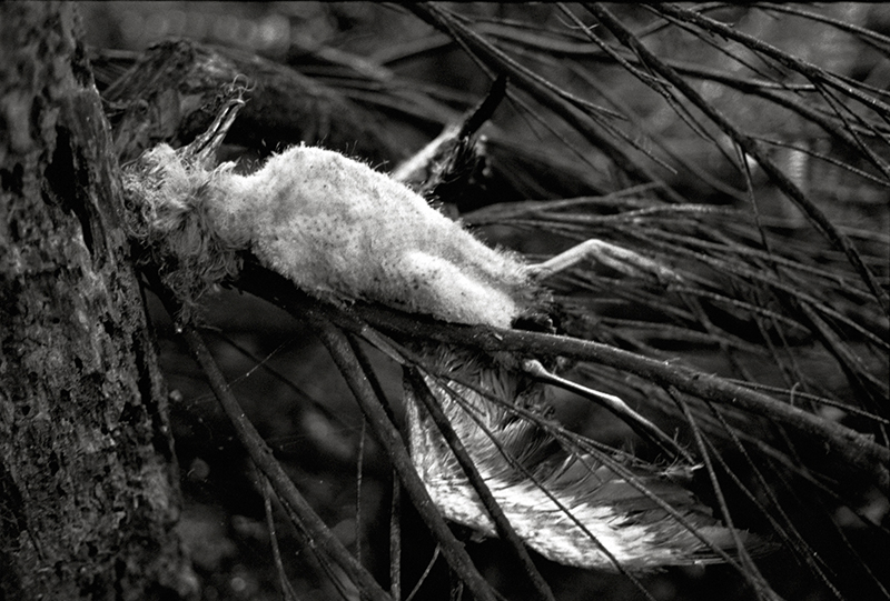 Bruce Connew  Muttonbirds - part of a story #24 , 2002 Selenium-toned, silver gelatin, fibre print Dimensions variable Edition open  _______