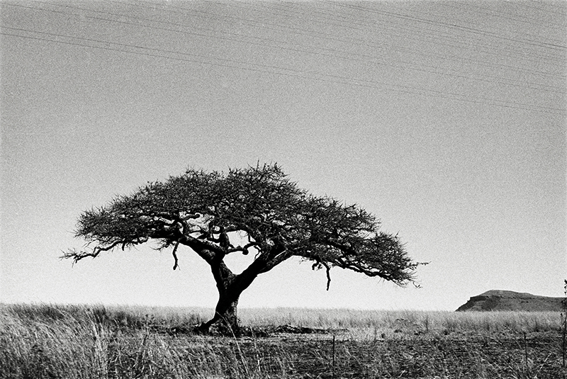 Bruce Connew  South Africa #1 , 1985 Selenium-toned, silver gelatin, fibre print Dimensions variable Edition open  _______