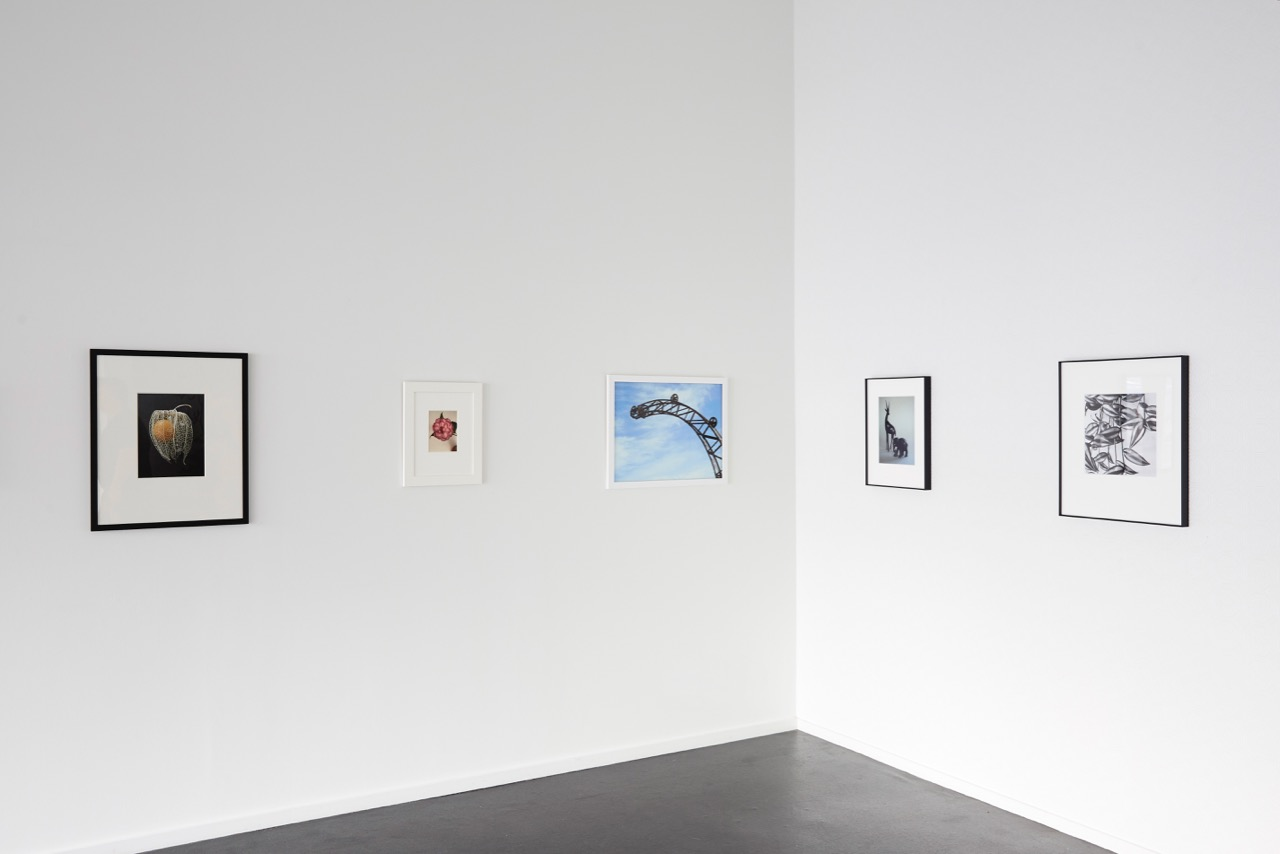 Peter Peryer Installation view {Suite}, Wellington  ______