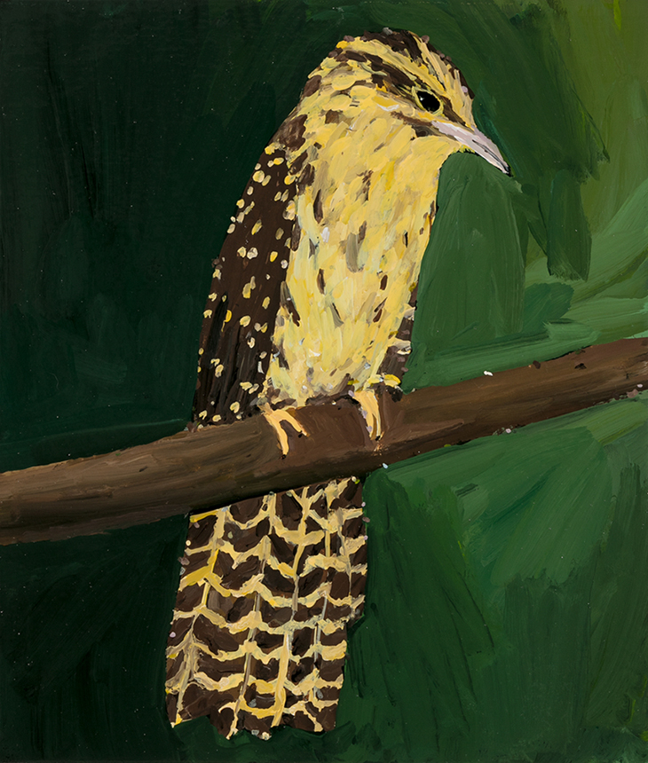 Richard Lewer  Long tailed cuckoo,  2019 Enamel on canvas 355 x 310 mm [Private collection]  ______