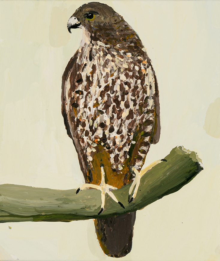 Richard Lewer  NZ Falcon,  2019 Enamel on canvas 355 x 310 mm [Private collection]  ______