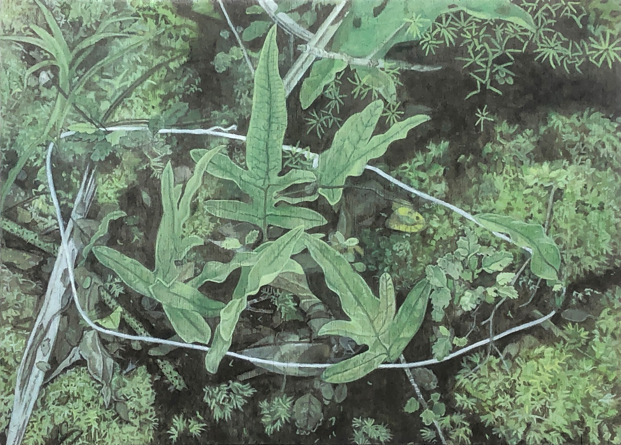 Lily McRae  String circle with Hound's Fern , 2019 Oil on board 300 x 420 mm [Private collection]  ______