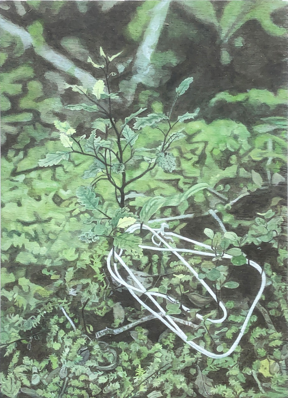 Lily McRae  Cat's cradle with Southern Beech and Hound's Tongue Fern , 2019 Oil on board 420 x 300 mm  ______