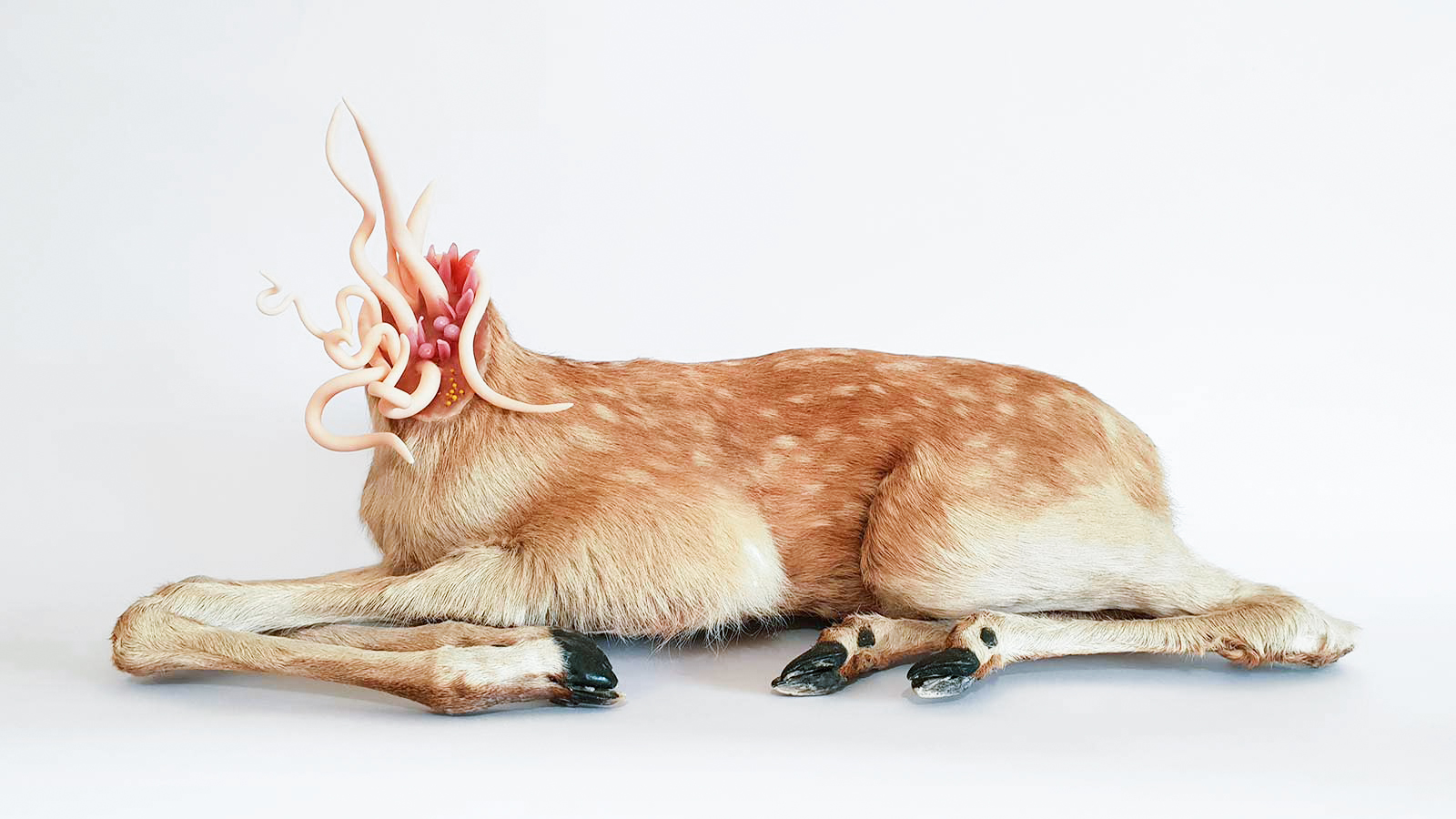 Angela Singer  Spurt V,   2018 Vintage recycled taxidermy fawn, mixed media 255 x 550 x 240 mm  ______