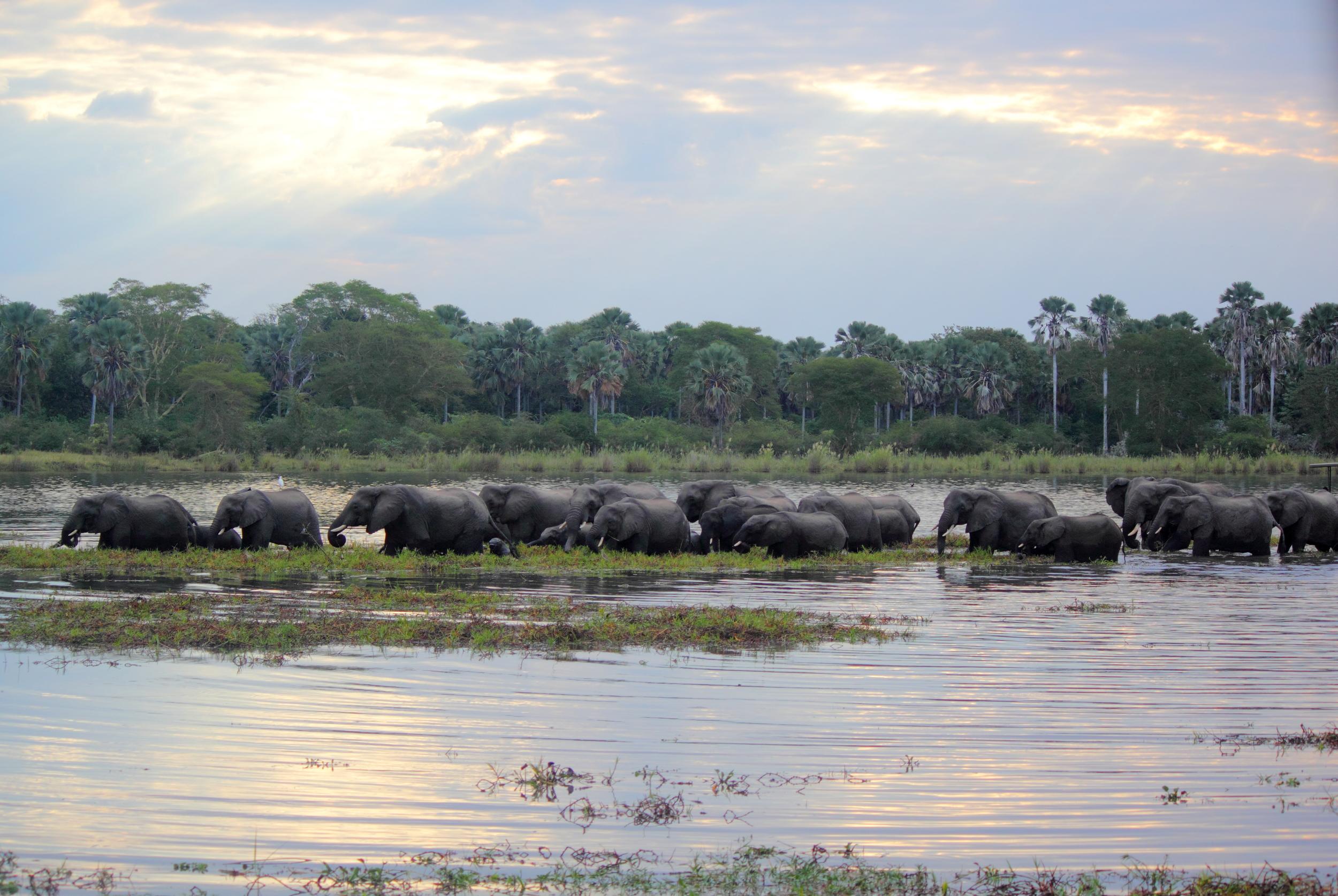 Elephant Herd_01.JPG
