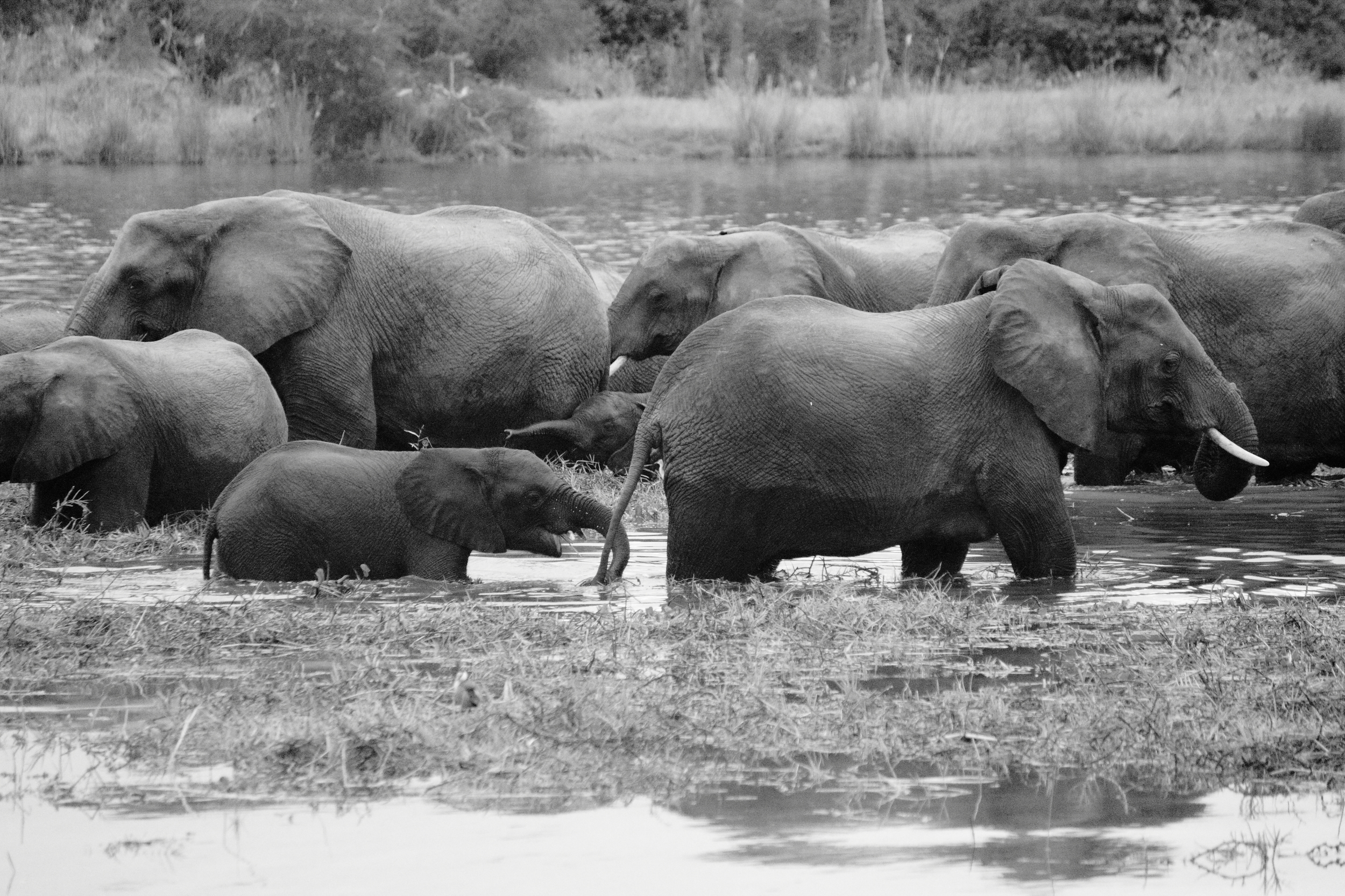 Elephant Herd_03.JPG