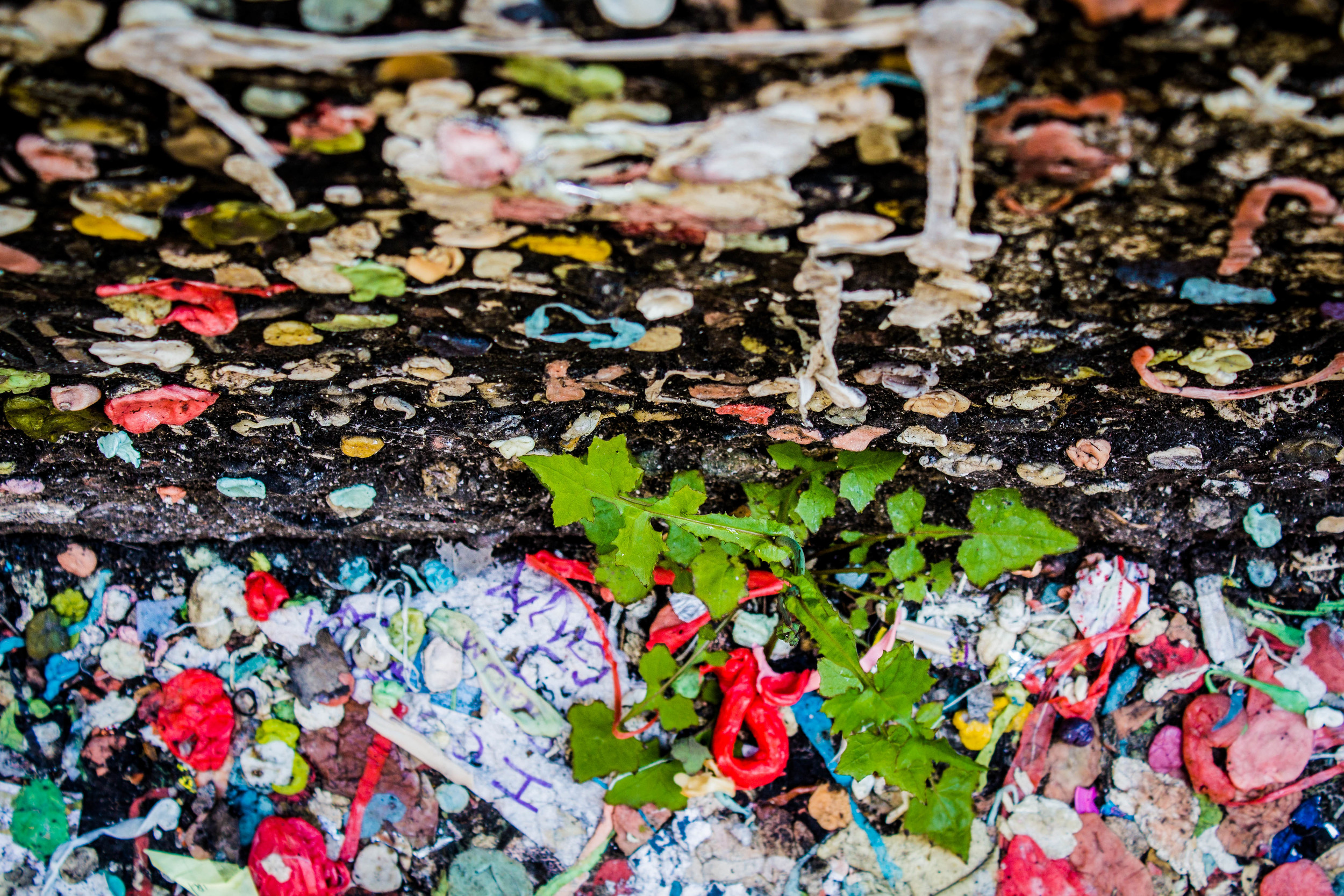 Gum wall before 2015 clean up.