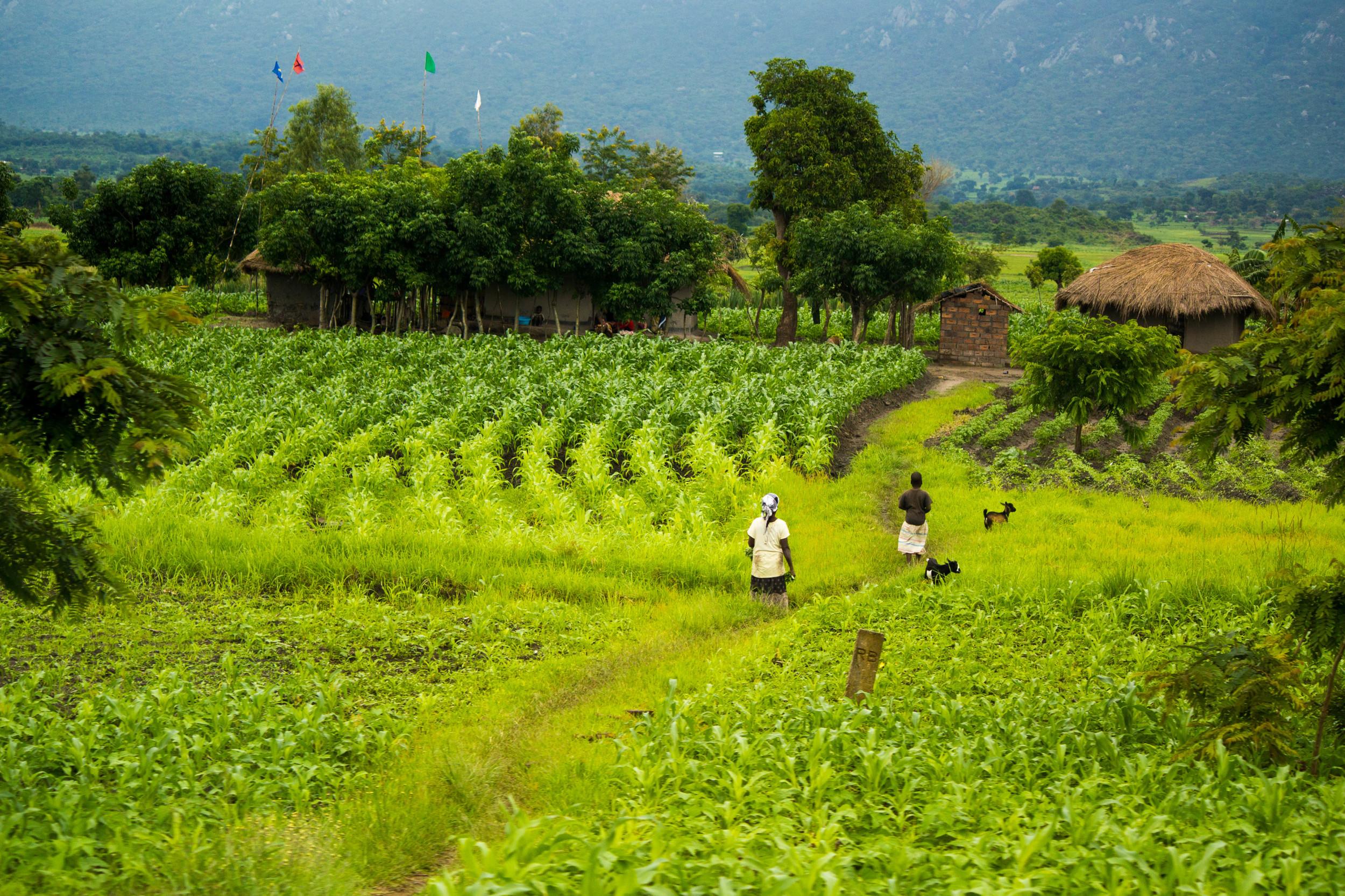Malawi Week 1-12.jpg