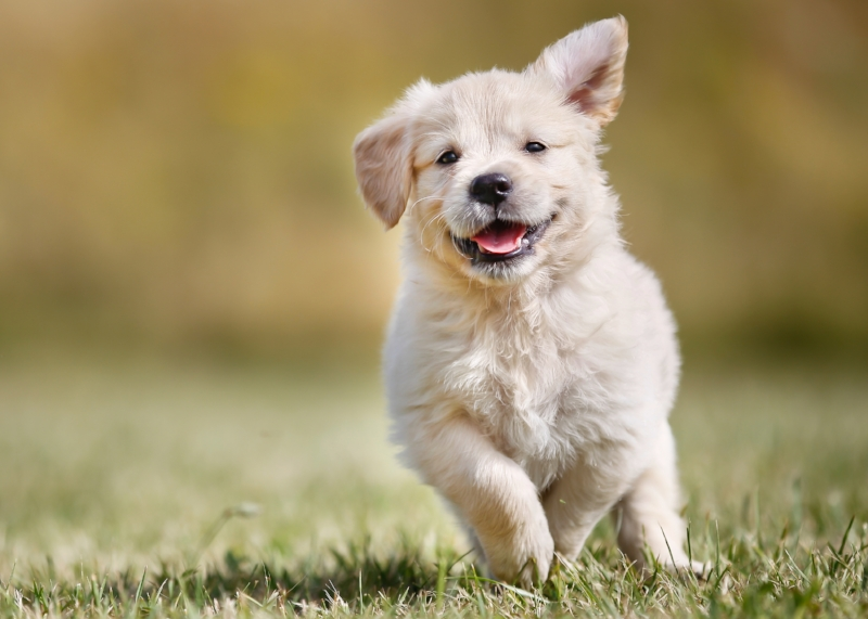try not to SMILE...when you see this puppy.