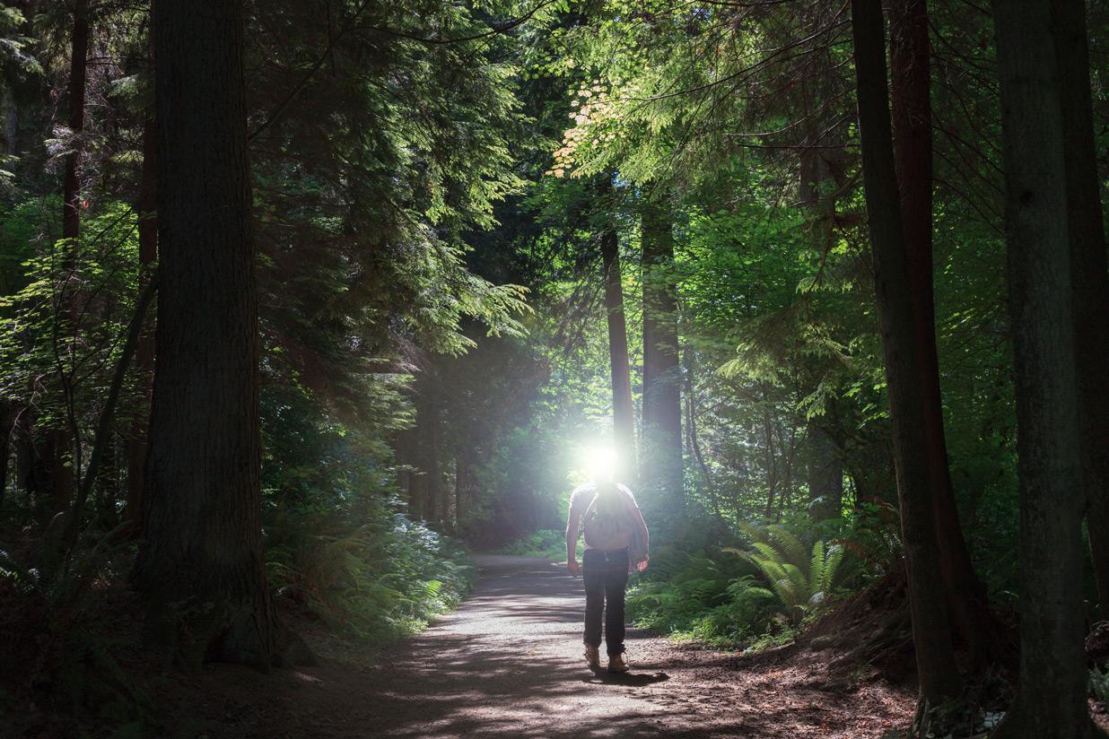 vancouver-woods.jpg