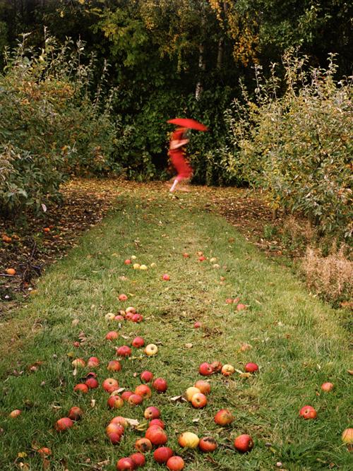 CAROL_FULTON_PHOTOGRAPHY_Apple Thief - Carol Fulton.jpg